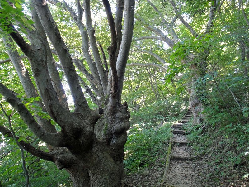 けやきの森(磐梯熱海)